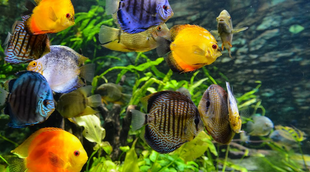 School of brightly coloured fish